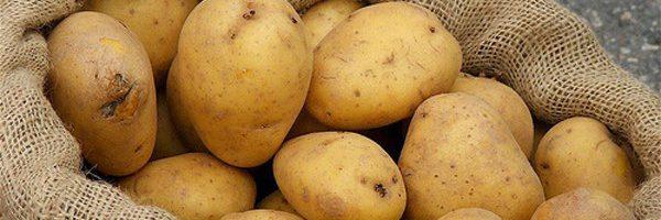 Điều trị bệnh trĩ bằng khoai tây